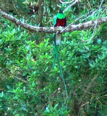 Savegre Hotel, Natural Reserve & Spa: Quetzal