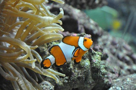 ... le lagon - Picture of Aquarium Mare Nostrum, Montpellier - TripAdvisor