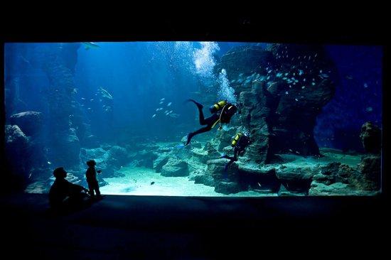 Aquarium Mare Nostrum : Le théâtre de l'Océan