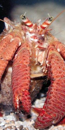 Aquarium Mare Nostrum : Le bernard l'hermite