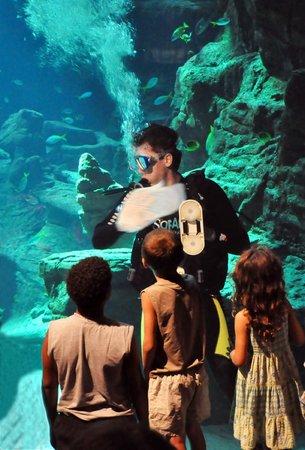 Aquarium Mare Nostrum : Animation plongée dans le bassin géant des requins