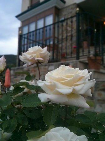 Villa Mencia: Jardín lleno de flores preciosas