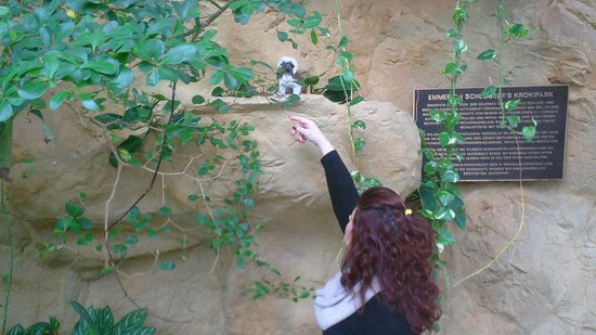 Haus des Meeres - Aqua Terra Zoo: very close with the mini monkeys