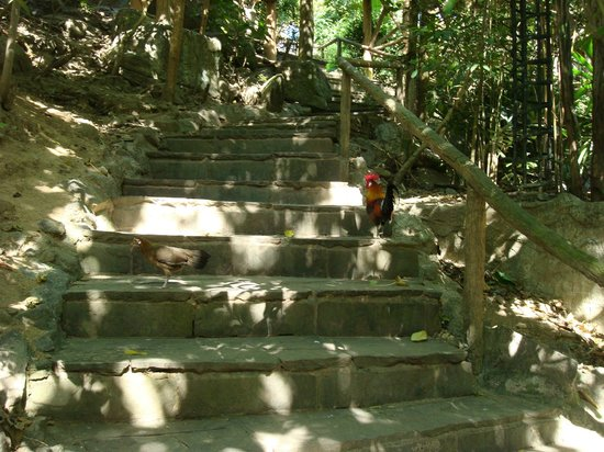 Khao Kheow Open Zoo: вольер с птицами