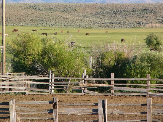 Cottonwood Guest Ranch: View from the lodge.