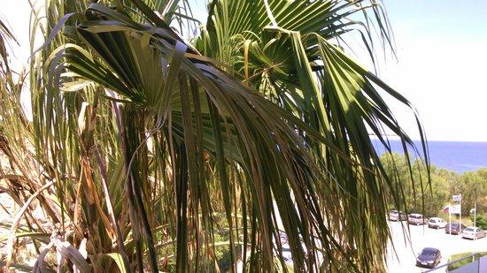 Eden Roc Resort Hotel & Bungalows: un palmier en guise de vue / peut mieux faire
