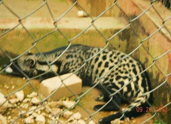 写真Kumasi Zoo枚