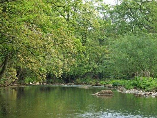 Ilam Park: The Dove