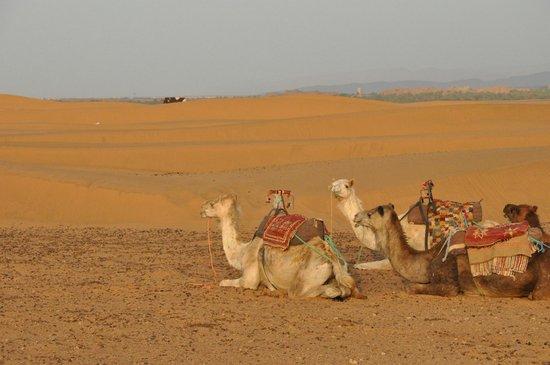 Riad Plein Sud : Zagora Desert