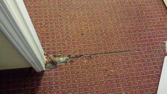 Hawthorn Suites by Wyndham Dayton North: worst areas of the worn carpet