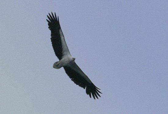 Khao Lak Land Discovery - Day Tours: Seeadler