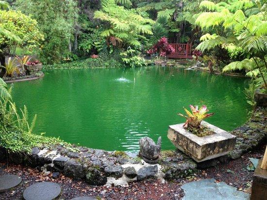 Volcano Hale: пруд в саду возле ресепшн Chalet Kiauea