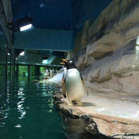 Tierpark Hellabrunn: Пингвин