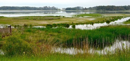Chincoteague National Wildlife Refuge: salt marshes full of wild life
