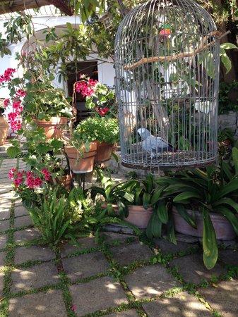 La Fenice: Barrack, the talking parrot