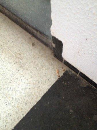 Safir Hotel Mazafran: Un hueso de pollo en las escaleras.