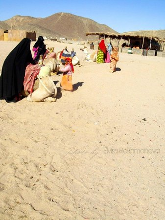 Eastern (Arabian) Desert : Бедуины