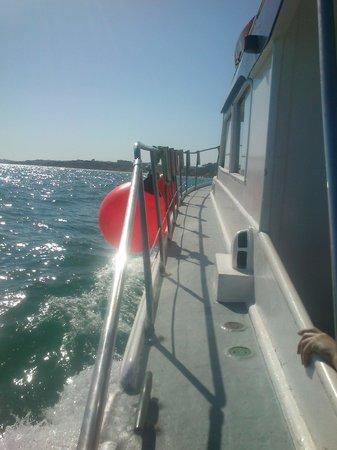 Algarve Seafaris : Passeio