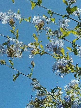 Tigmi : Blue skies...