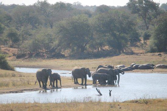 Pestana Kruger Lodge: Crocodile River