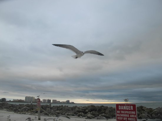 Seagull over Clearwater Beach