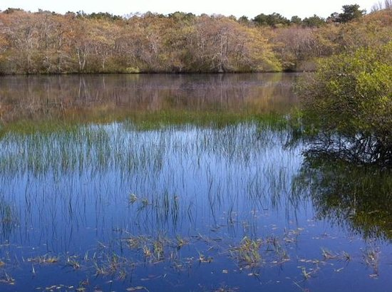 Beech Forest: Great Pond