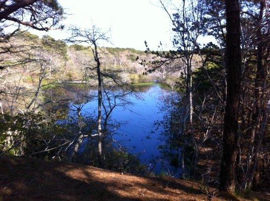 Beech Forest: Blackwater Pond