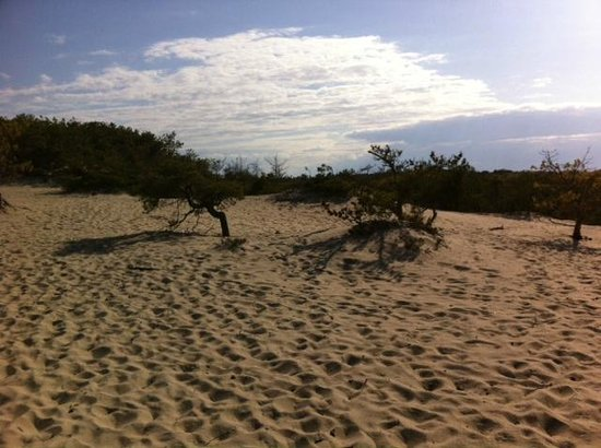 Beech Forest: Dune Scape