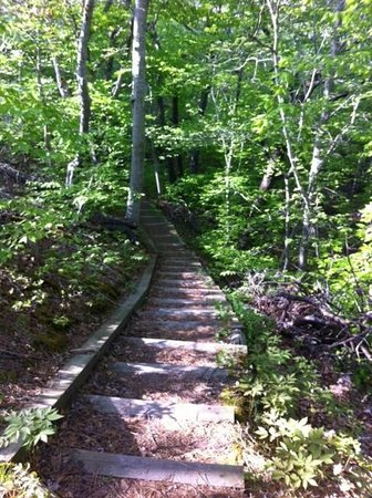 Beech Forest: Stairs on Loop Trail