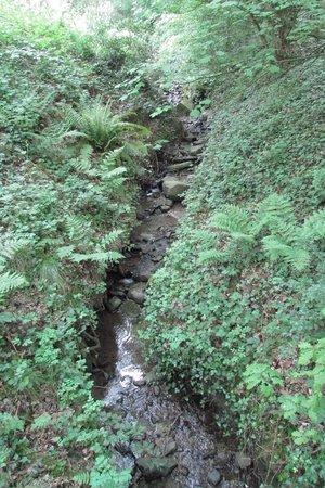 WWT Washington Wetland Centre: Water Feature