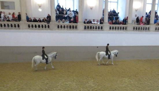 Spanish Riding School : The riding arena