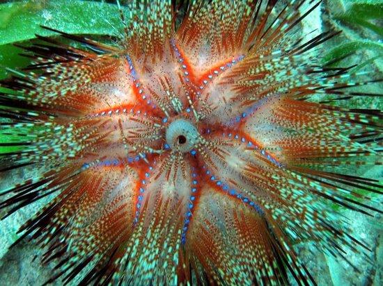 Peponi Scuba Diving
