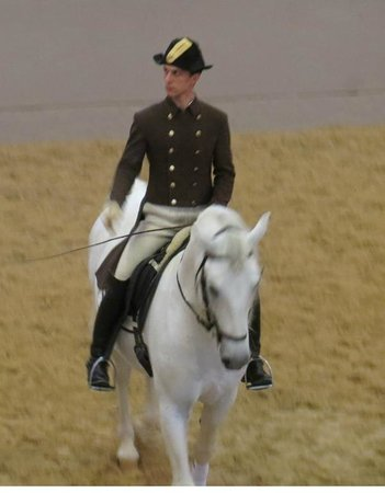 Spanish Riding School : These animals are magnificent