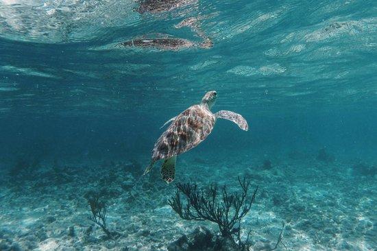 Hotel Jashita: Soliman Bay Sea Turtle