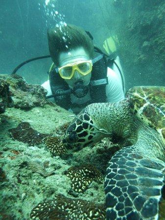 Bophut Diving Tours: Turtles!!!