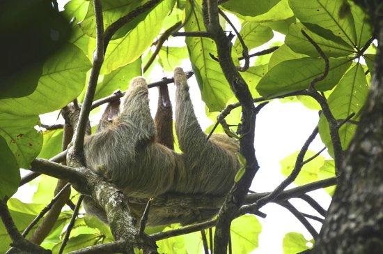 Manuel Antonio Expeditions: Sloth
