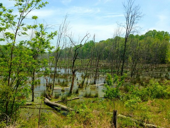 King George, VA: A Wetland in the Wild Along the Trail