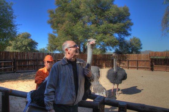 Safari Ostrich Show Farm: Up close and personal