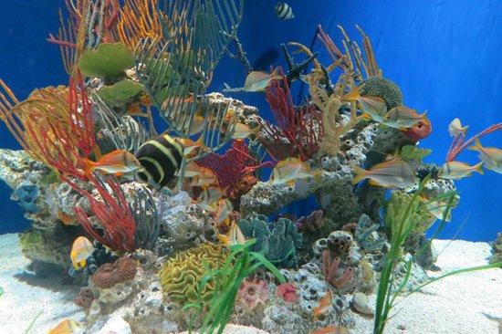 Georgia Aquarium : Aquário com muitas belezas...é maravilhoso