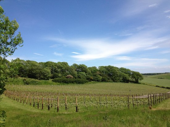 Terlingham Vineyard & Winery
