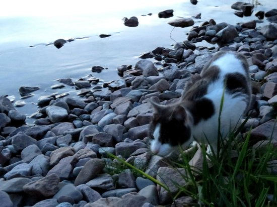 Balachladaich Loch Ness B&B : The friendliest cat in the world shows us the beach