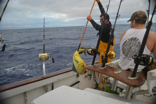 Extreme Sport Fishing Maui : gaffing a nice mahi mahi