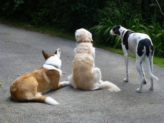 Coedllys Country House B&B: Alfie, Emma and Buddy watching a guest leave