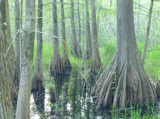 Lake Martin: Flora