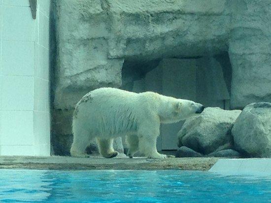 Zoo de la Palmyre : l'ours