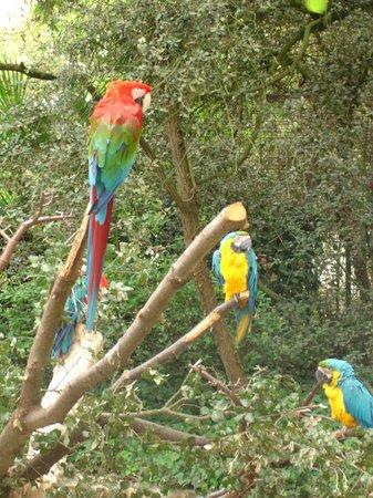 Zoo de la Palmyre : les perroquets