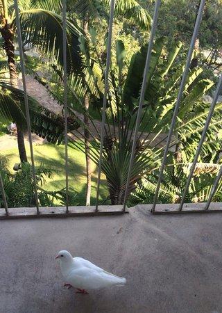 Waikiki Gateway Hotel: Birdy walked into my room