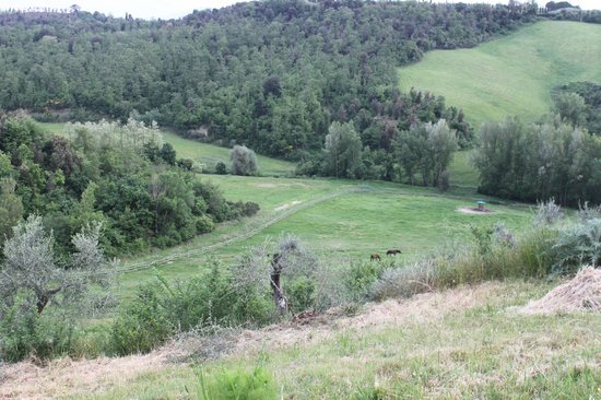 Azienda Agraria Le Crete Agriturismo: colline