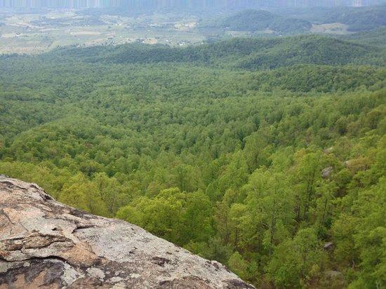 Old Rag Mountain Hike: Fauna in full bloom