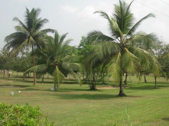 Coconut Grove Beach Resort: Garten und Grünanlagen
